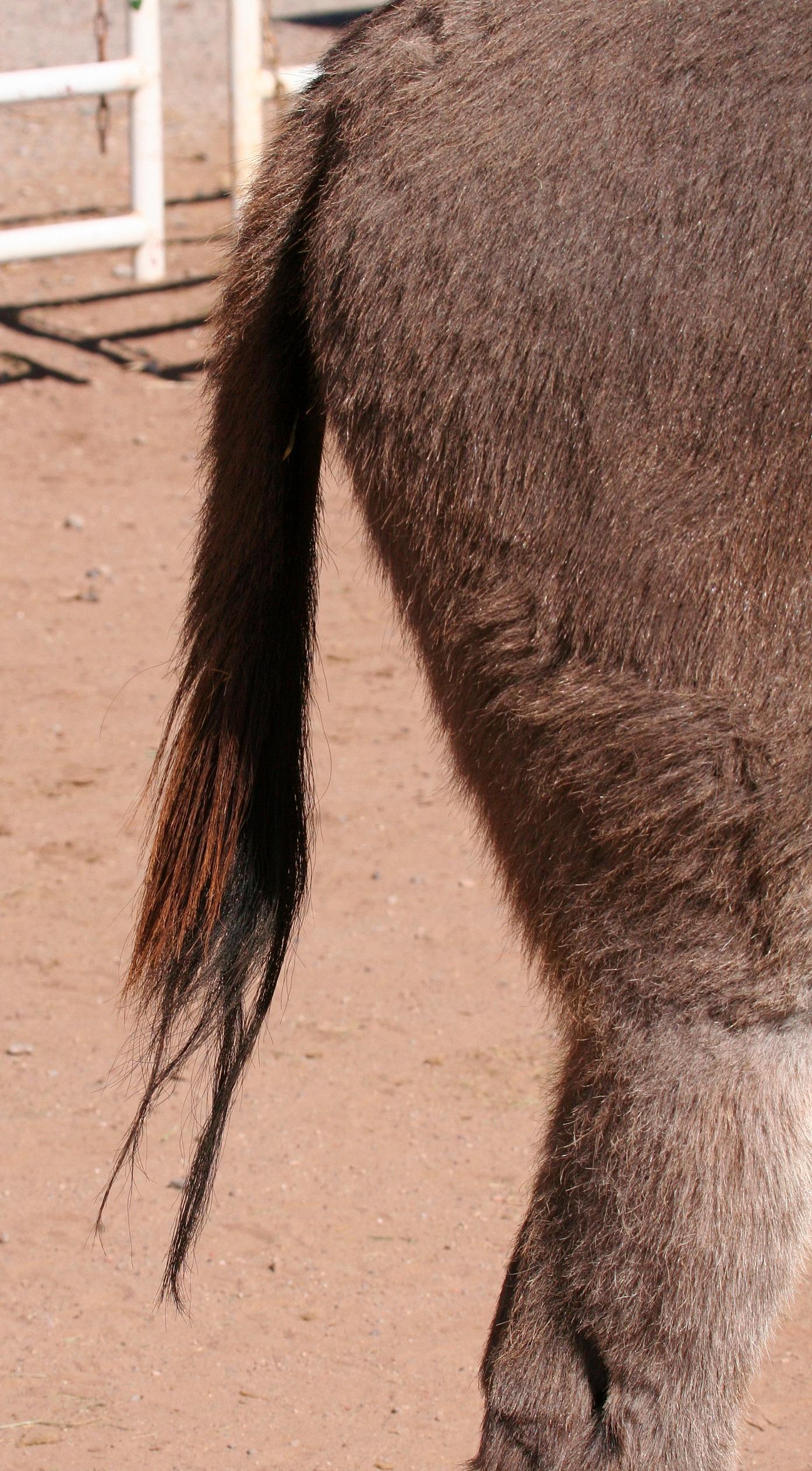 Donkey Tail Morning Bray Farm