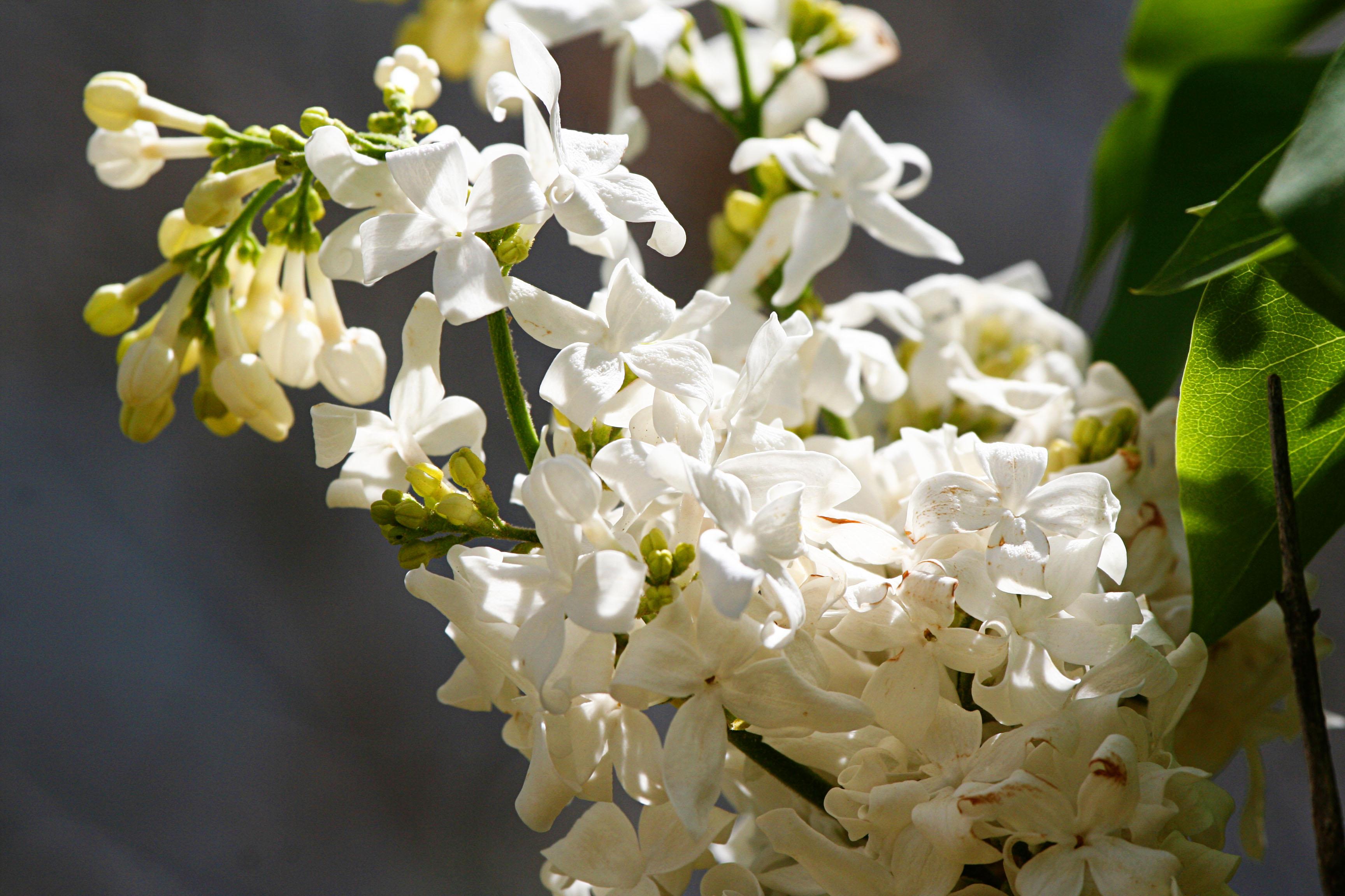Flowers Always Make Me Happy Morning Bray Farm