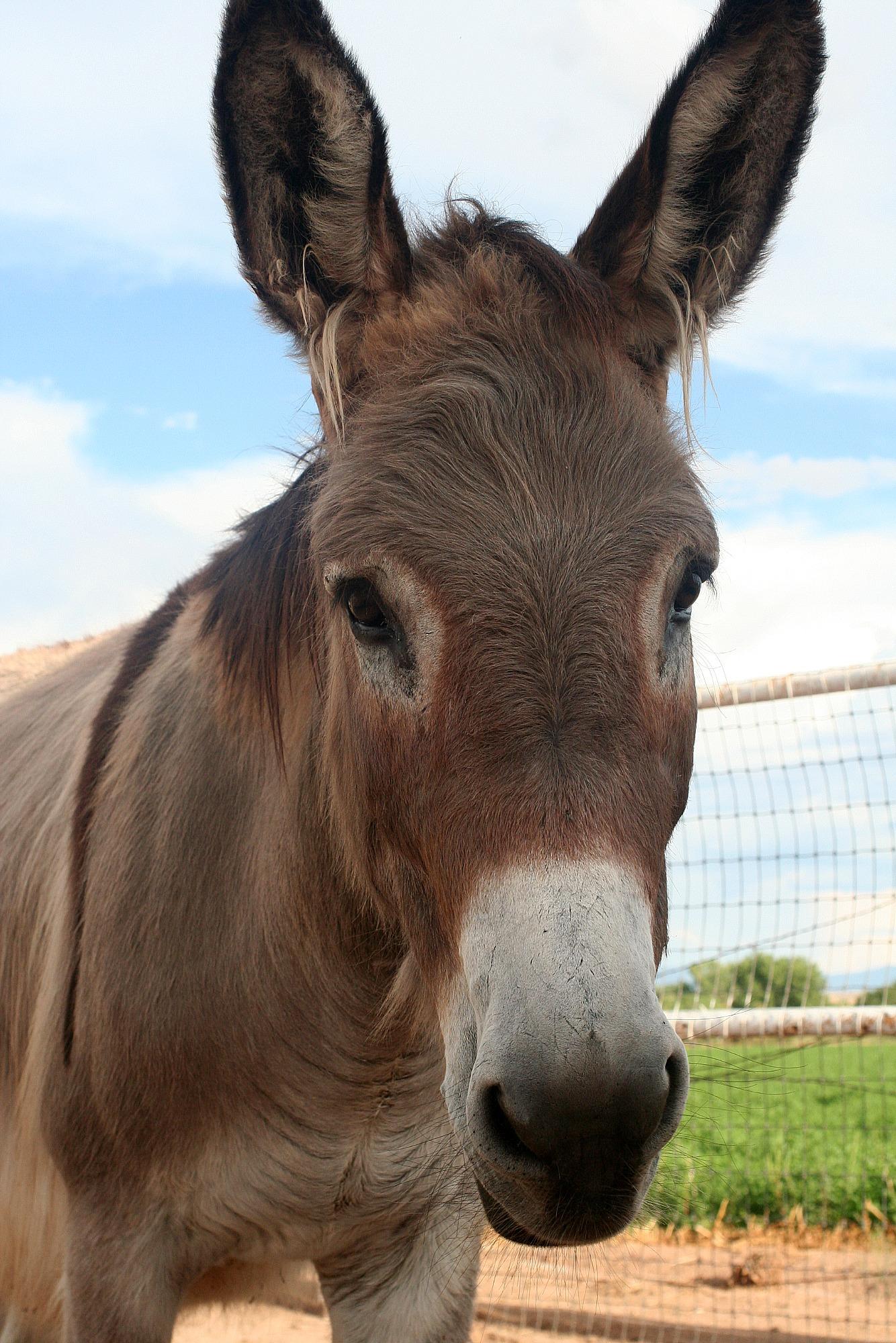 Donkeys Pooping