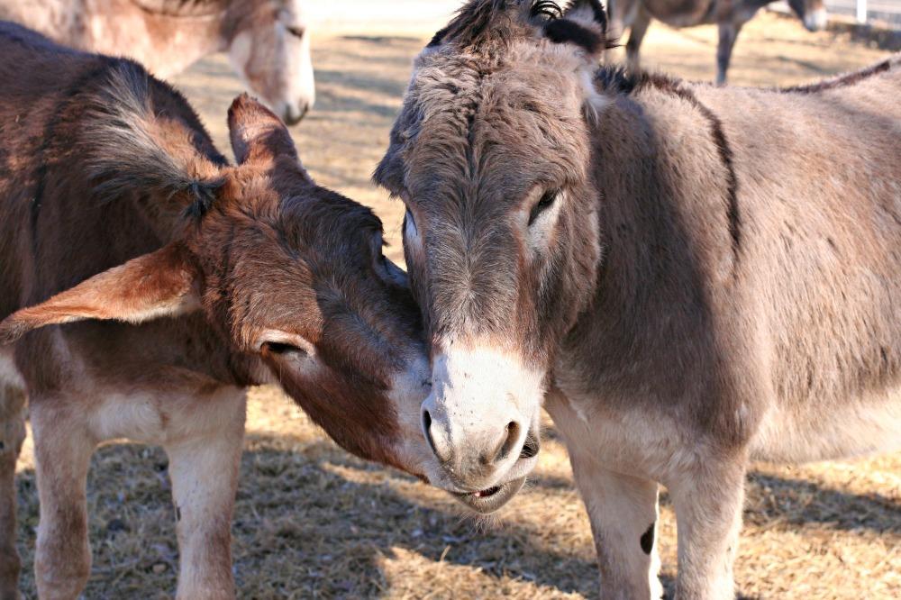 Bernard and Buck2