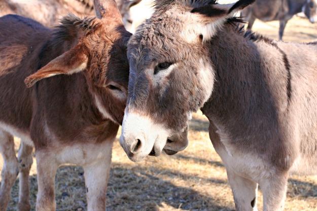 Bernard and Buck3