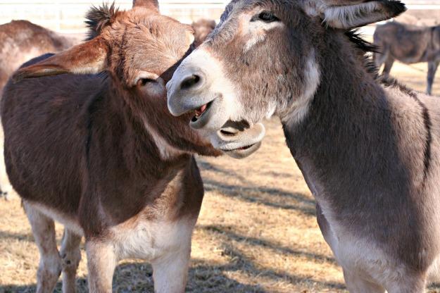 Bernard and Buck4