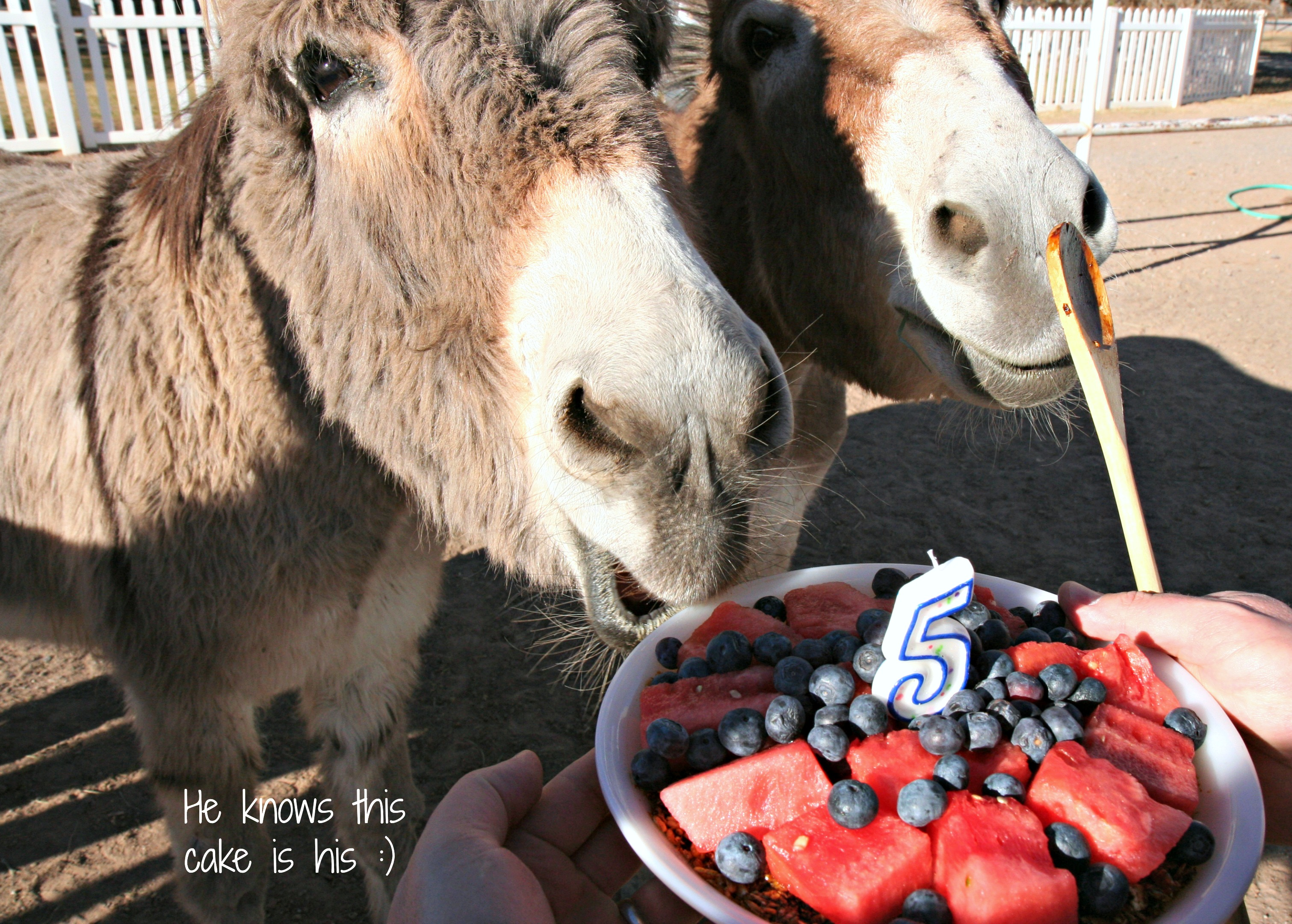 Donkey Birthday Cake Morning Bray Farm