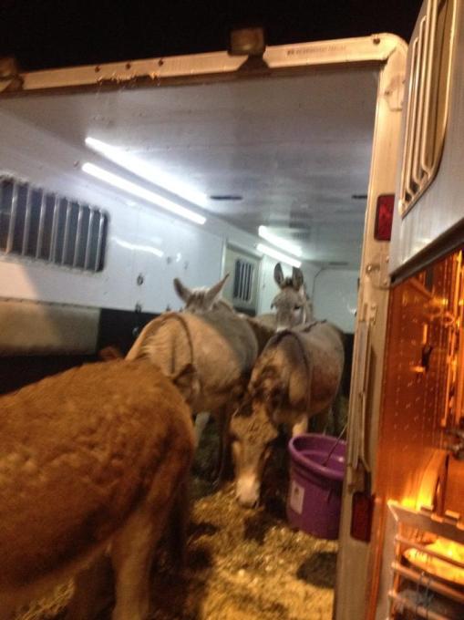 Herd arriving in VA
