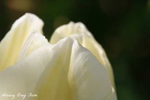 Botanical Gardens7