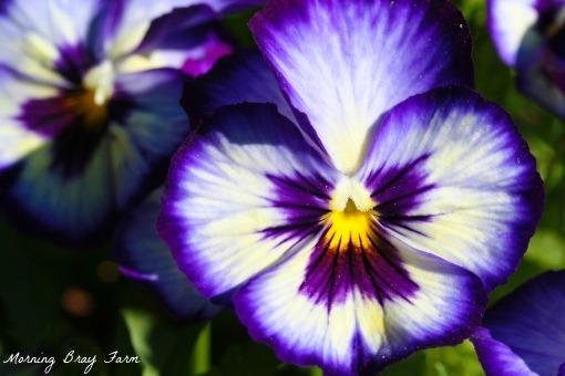 Botanical Gardens9