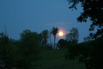 Pink Moon1